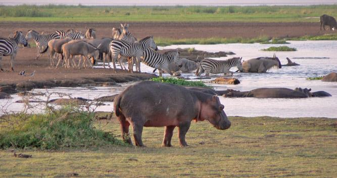 Lake Manyara National Park Oasis Travel