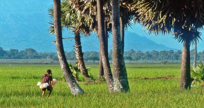 Farm worker, Chau Doc, Mekong Delta, Vietnam