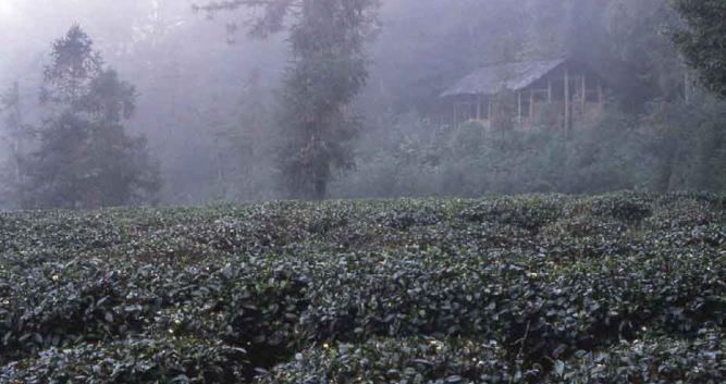 mist-vista-Mt-Emeishan-near-Chengdu-China