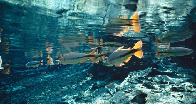 A float trip down the Prata River, Bonito, Brazil