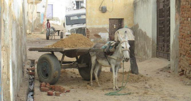 Donkey pulling a cart of sand, Alsisar, India