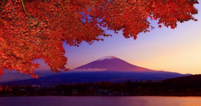 Maple Tree - Mount Fuji - Lake Kawaguchi - Luxury Japan Tours