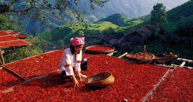 Hilltribe girl with chilies, Yunnan, China