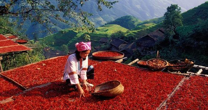 Chillies, Yunnan, Southern China