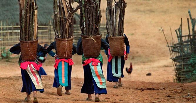 Hmong hilltribe ladies collecting firewood, Laos