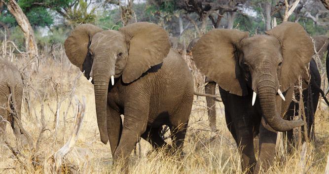 Linyati, Selinda and Kwando