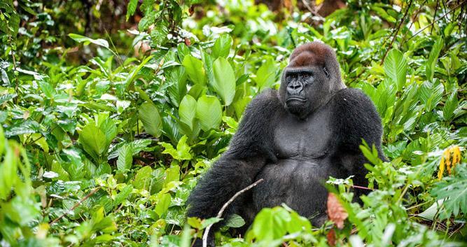 Lobéké National Park