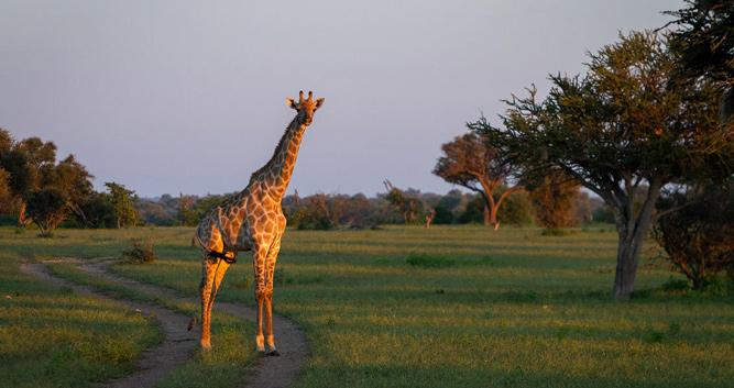 Credit: Tuli Safari Lodge