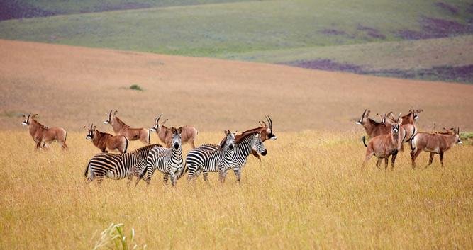 Nyika National Park