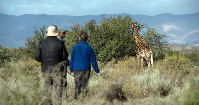 Copyright Sanbona Wildlife Reserve