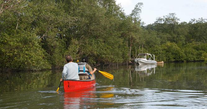Paddling through the mangroves, Marau Peninsula, Brazil