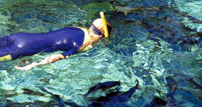 Snorkelling down the Rio da Prata River, Bonito, Brazil