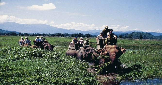 Elephant riding, Dalat, Vietnam
