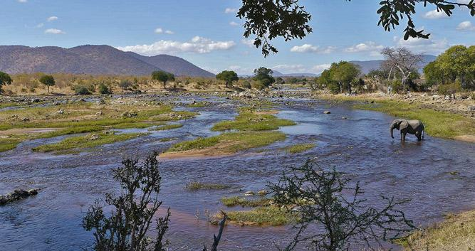 Ruaha National Park Oasis Travel