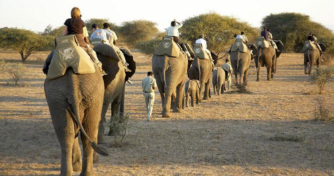 elephant-safari-Bardia-National-Park-Luxury-Nepal-Wildlife-Holidays