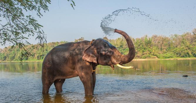 elephant_Chitwan_National_Park-Luxury-Nepal-Holidays