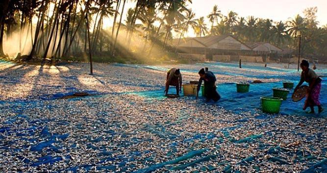 Drying-fishNgapali-Beach-Luxury-Burma-Travel