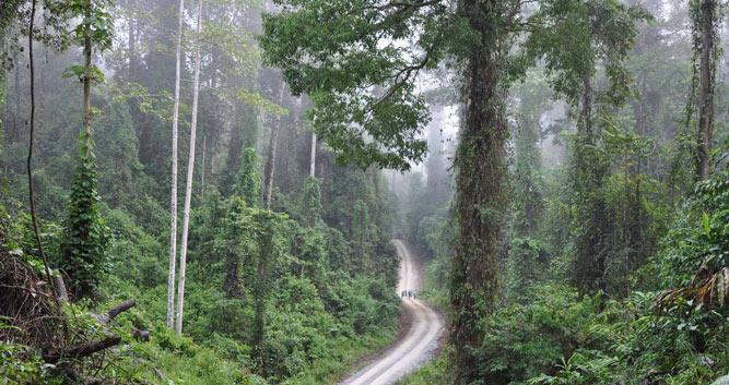 Heart of the Danum Valley rainforest, Borneo