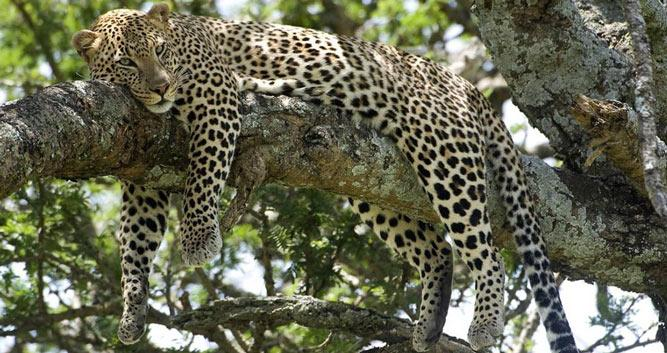 Selous Game Reserve Oasis Travel
