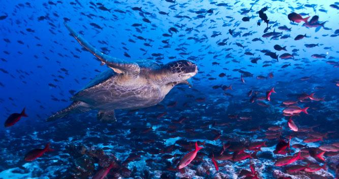 World class diving around Fernando de Noronha, Brazil