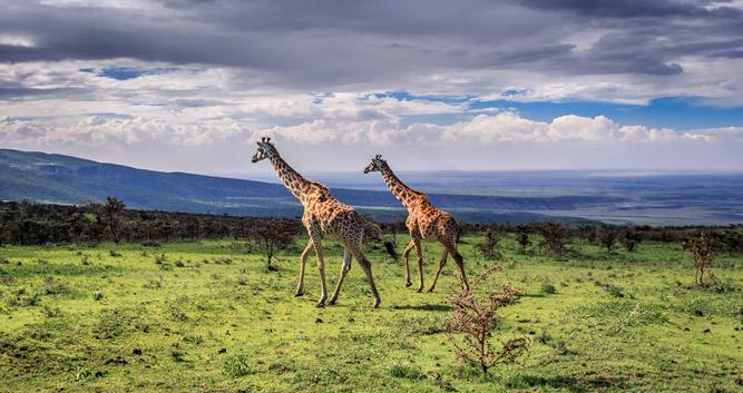 Tarangire National Park Oasis Travel