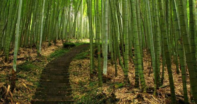 Image of Bamboo forest, rural China - Luxury China Travel