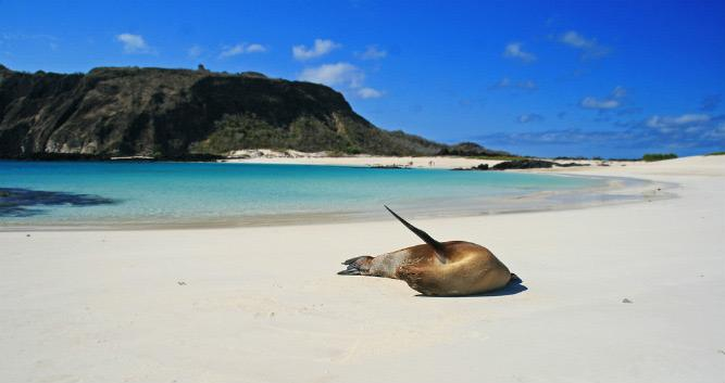 seal on deserted beach, , Galapagos Islands, Ecuador