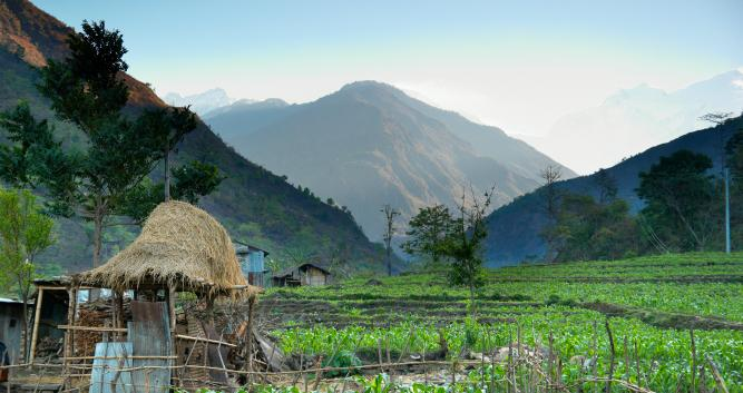 Rice Fields, Nepal