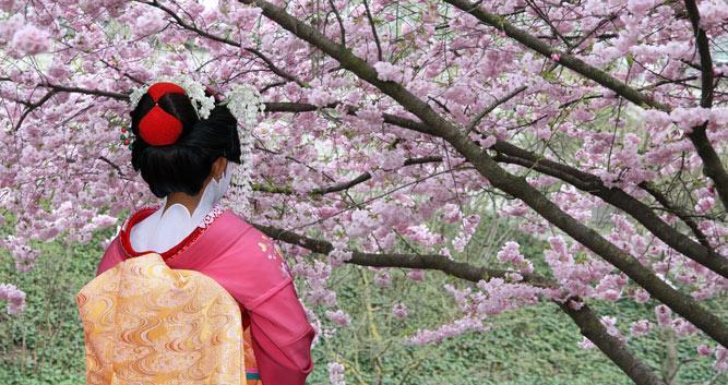 Geisha with Sakura Tree, Japan