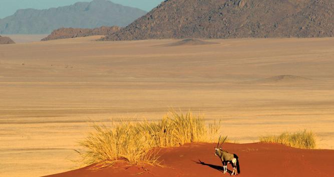 Oryx_namibia