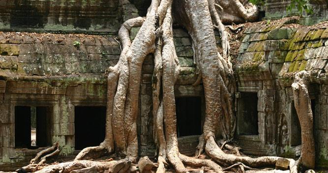 Ta Prohm overgrown temple, Siem Reap, Cambodia