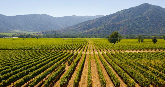 Vinyards of Chile, South America