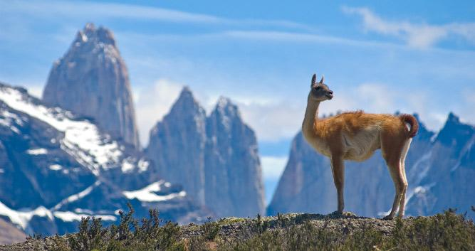 Llama and the Andes, Chile, South America